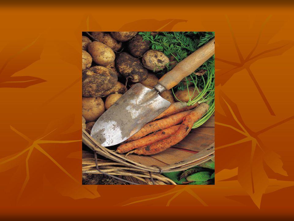 CVIČENÍ: U následujících potravin vypište ke každé způsob opracování nebo čištění a předběžné přípravy: U následujících potravin vypište ke každé způsob opracování nebo čištění a předběžné přípravy: Brambory – ranné, brambory – pozdní, květák, papriky, rajčata, broskve, hrách, rýže, vlašské ořechy, hlávkový salát, hrušky, čínské zelí, brokolice, mrkev karotka mladá, Brambory – ranné, brambory – pozdní, květák, papriky, rajčata, broskve, hrách, rýže, vlašské ořechy, hlávkový salát, hrušky, čínské zelí, brokolice, mrkev karotka mladá, petržel-kudrnka, pažitka – své tipy konzultujte se svým kolegou.