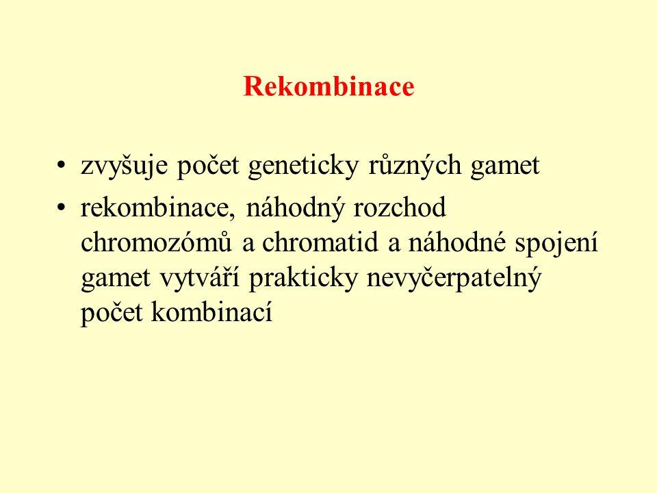 Rekombinace zvyšuje počet geneticky různých gamet rekombinace, náhodný rozchod chromozómů a chromatid a náhodné spojení gamet vytváří prakticky nevyčerpatelný počet kombinací