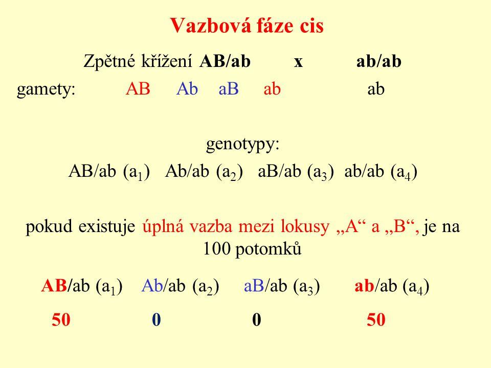 "Vazbová fáze cis Zpětné křížení AB/ab x ab/ab gamety: AB Ab aB ab ab genotypy: AB/ab (a 1 ) Ab/ab (a 2 ) aB/ab (a 3 ) ab/ab (a 4 ) pokud existuje úplná vazba mezi lokusy ""A a ""B , je na 100 potomků AB/ab (a 1 ) Ab/ab (a 2 ) aB/ab (a 3 ) ab/ab (a 4 ) 50 0 0 50"