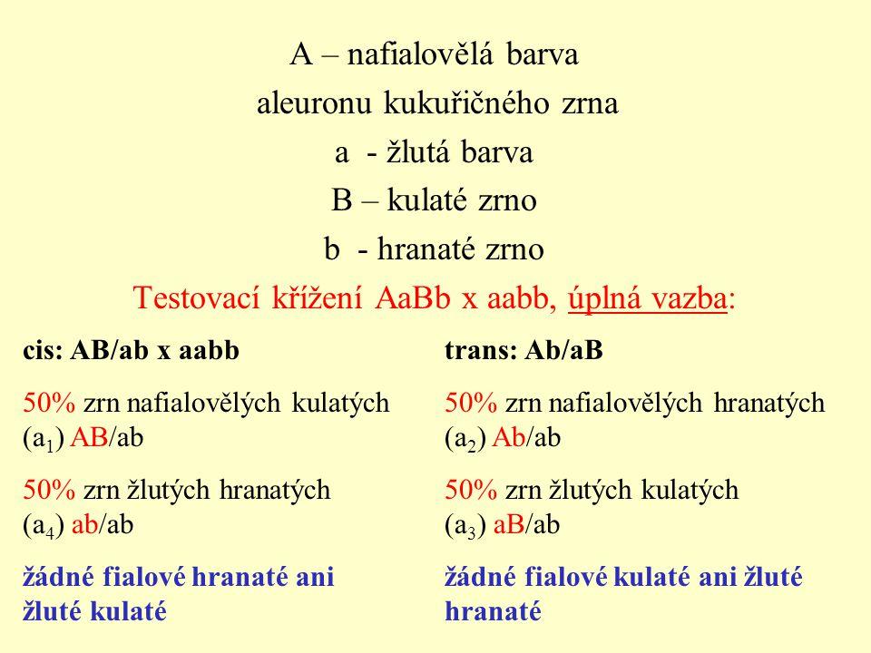 A – nafialovělá barva aleuronu kukuřičného zrna a - žlutá barva B – kulaté zrno b - hranaté zrno Testovací křížení AaBb x aabb, úplná vazba: cis: AB/ab x aabb 50% zrn nafialovělých kulatých (a 1 ) AB/ab 50% zrn žlutých hranatých (a 4 ) ab/ab žádné fialové hranaté ani žluté kulaté trans: Ab/aB 50% zrn nafialovělých hranatých (a 2 ) Ab/ab 50% zrn žlutých kulatých (a 3 ) aB/ab žádné fialové kulaté ani žluté hranaté