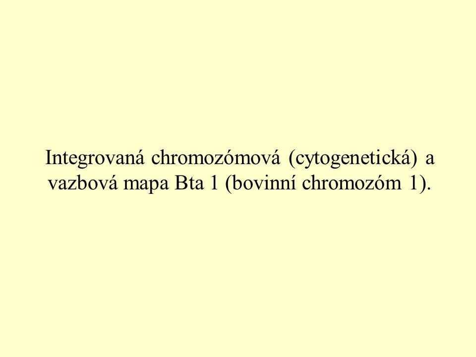 Integrovaná chromozómová (cytogenetická) a vazbová mapa Bta 1 (bovinní chromozóm 1).