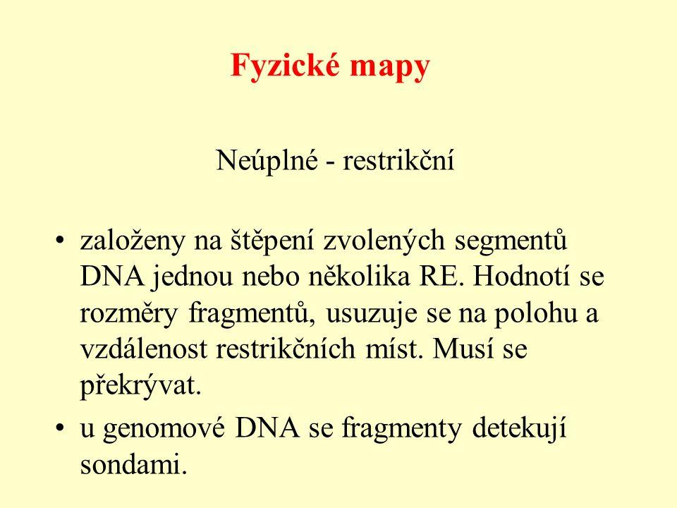 Fyzické mapy založeny na štěpení zvolených segmentů DNA jednou nebo několika RE.