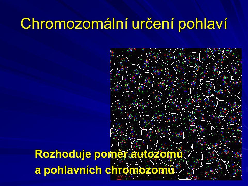 Chromozomální určení pohlaví Rozhoduje poměr autozomů a pohlavních chromozomů