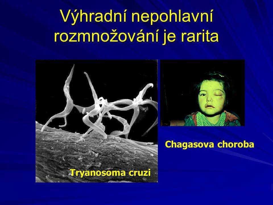Výhradní nepohlavní rozmnožování je rarita Tryanosoma cruzi Chagasova choroba