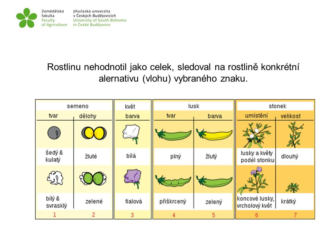 Rostlinu nehodnotil jako celek, sledoval na rostlině konkrétní alernativu (vlohu) vybraného znaku.