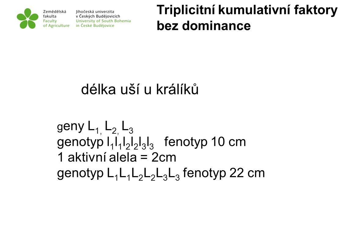 délka uší u králíků g eny L 1, L 2, L 3 genotyp l 1 l 1 l 2 l 2 l 3 l 3 fenotyp 10 cm 1 aktivní alela = 2cm genotyp L 1 L 1 L 2 L 2 L 3 L 3 fenotyp 22