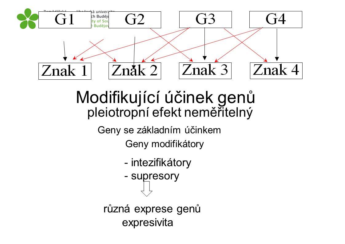 Modifikující účinek genů pleiotropní efekt neměřitelný Geny modifikátory expresivita různá exprese genů - intezifikátory - supresory Geny se základním