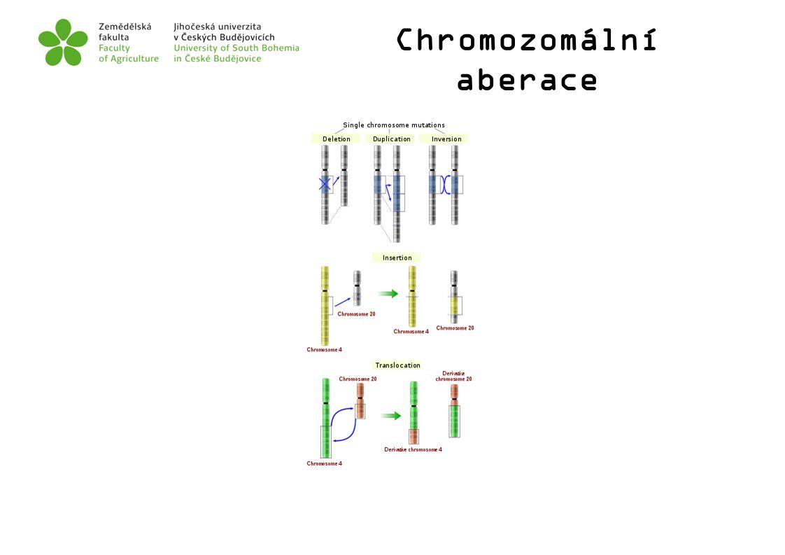 Chromozomální aberace
