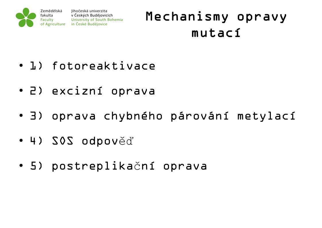 Mechanismy opravy mutací 1) fotoreaktivace 2) excizní oprava 3) oprava chybného párování metylací 4) SOS odpověď 5) postreplikační oprava