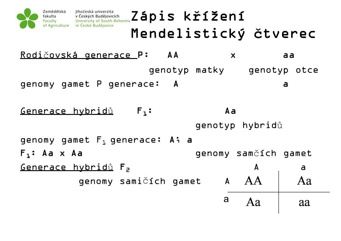 Zápis křížení Mendelistický čtverec Rodičovská generace P: AA x aa genotyp matky genotyp otce genomy gamet P generace: Aa Generace hybridůF 1 :Aa geno