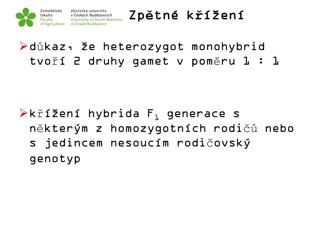 Zpětné křížení  důkaz, že heterozygot monohybrid tvoří 2 druhy gamet v poměru 1 : 1  křížení hybrida F 1 generace s některým z homozygotních rodičů