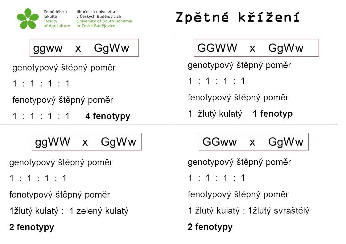 Zpětné křížení ggww x GgWwGGWW x GgWw ggWW x GgWwGGww x GgWw genotypový štěpný poměr 1 : 1 : 1 : 1 fenotypový štěpný poměr 1 : 1 : 1 : 1 4 fenotypy ge