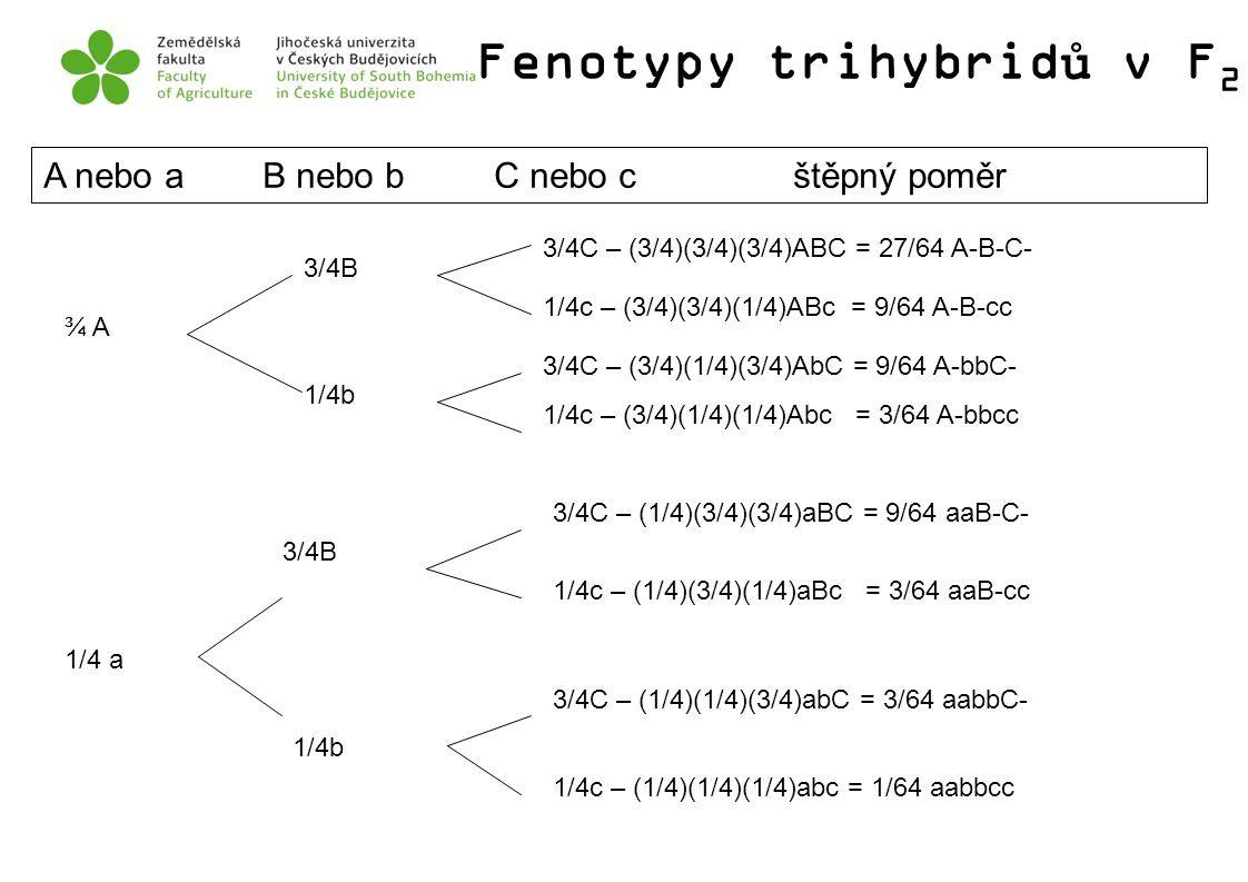 Fenotypy trihybridů v F 2 A nebo a B nebo b C nebo c štěpný poměr ¾ A 1/4 a 3/4B 3/4C – (3/4)(3/4)(3/4)ABC = 27/64 A-B-C- 1/4c – (3/4)(3/4)(1/4)ABc =