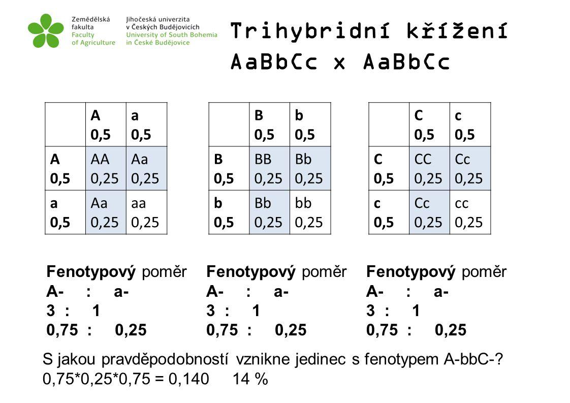 Trihybridní křížení AaBbCc x AaBbCc A 0,5 a 0,5 A 0,5 AA 0,25 Aa 0,25 a 0,5 Aa 0,25 aa 0,25 B 0,5 b 0,5 B 0,5 BB 0,25 Bb 0,25 b 0,5 Bb 0,25 bb 0,25 C