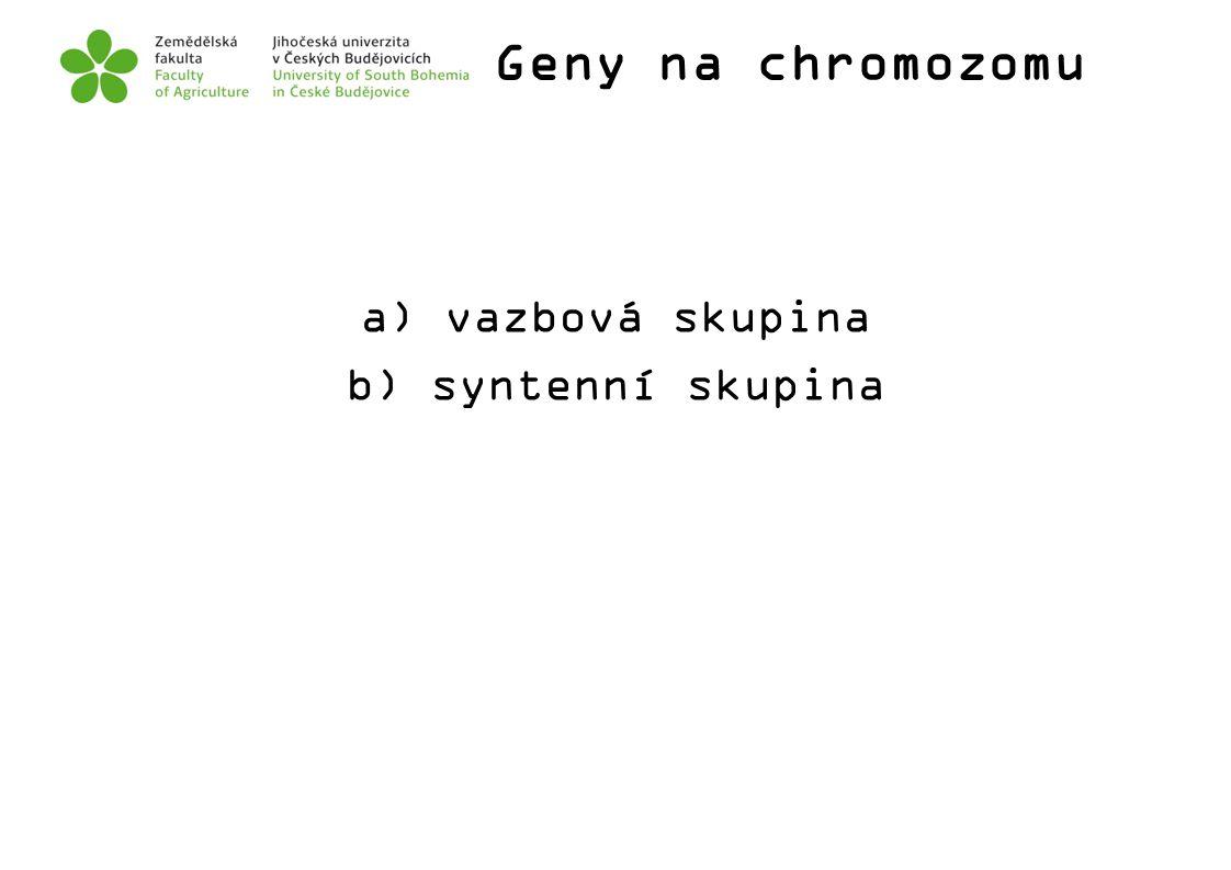 Geny na chromozomu a) vazbová skupina b) syntenní skupina