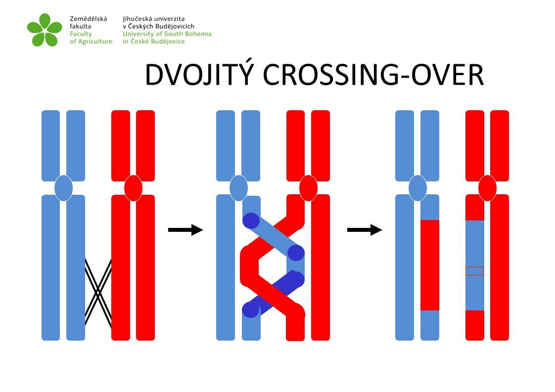 DVOJITÝ CROSSING-OVER