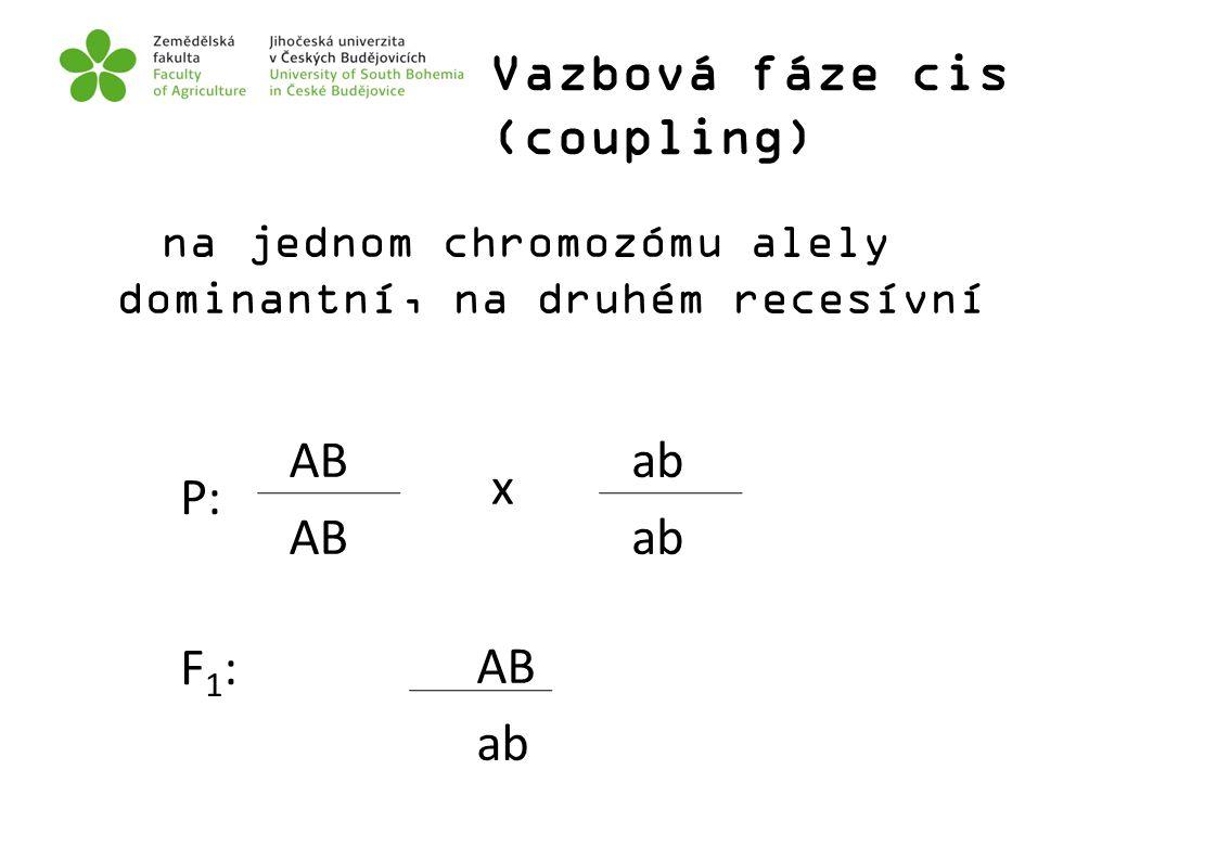Vazbová fáze cis (coupling) na jednom chromozómu alely dominantní, na druhém recesívní AB ab P: AB ab x F1: F1: