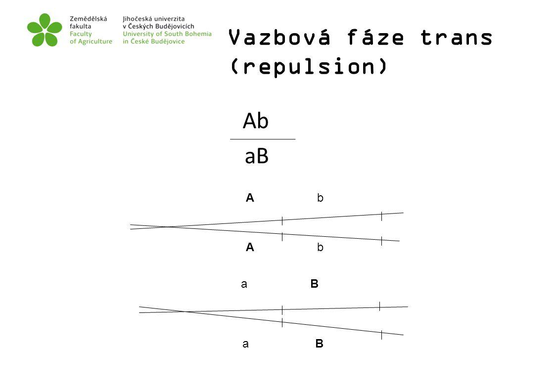 a B A b Vazbová fáze trans (repulsion) Ab aB A b a B