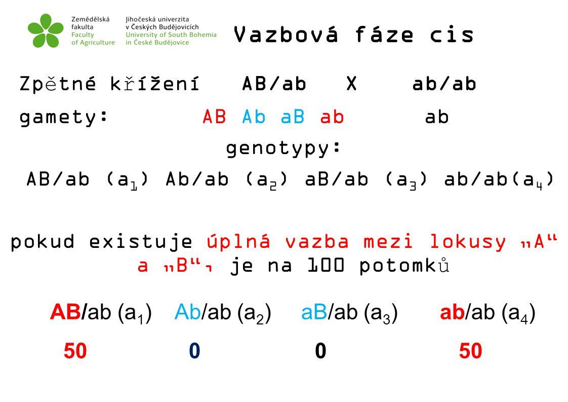 Vazbová fáze cis Zpětné křížení AB/ab X ab/ab gamety: AB Ab aB ab ab genotypy: AB/ab (a 1 ) Ab/ab (a 2 ) aB/ab (a 3 ) ab/ab(a 4 ) pokud existuje úplná
