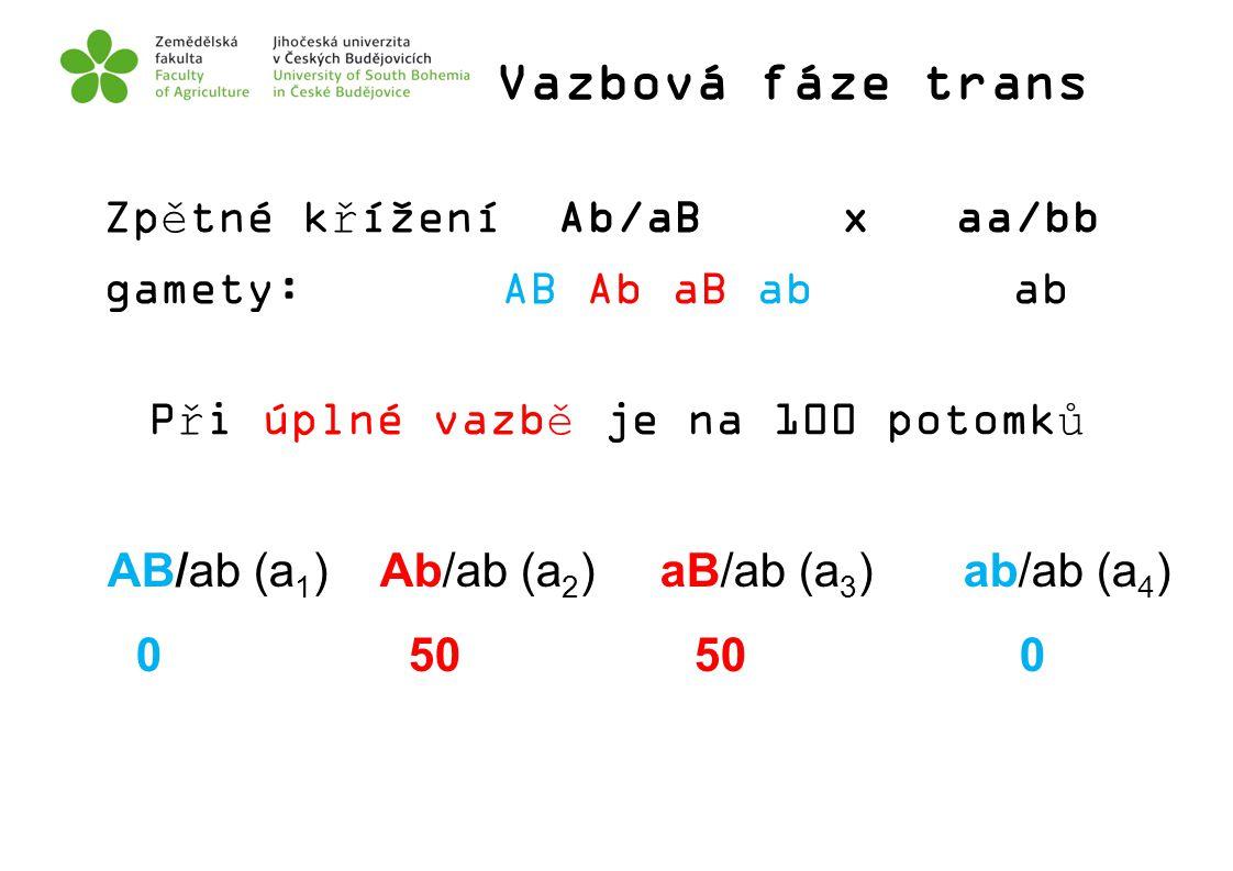 Vazbová fáze trans Zpětné křížení Ab/aB x aa/bb gamety: AB Ab aB ab ab Při úplné vazbě je na 100 potomků AB/ab (a 1 ) Ab/ab (a 2 ) aB/ab (a 3 ) ab/ab
