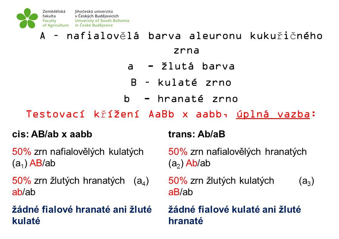 A – nafialovělá barva aleuronu kukuřičného zrna a - žlutá barva B – kulaté zrno b - hranaté zrno Testovací křížení AaBb x aabb, úplná vazba: cis: AB/a