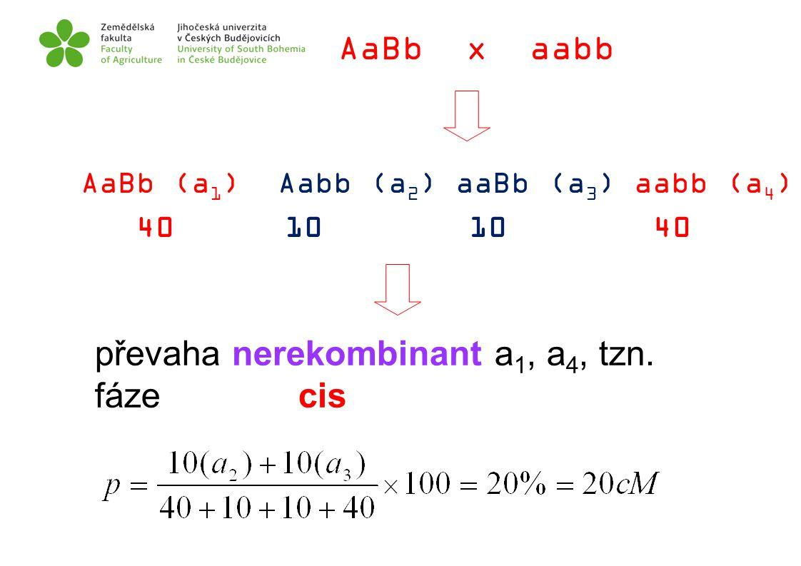AaBb x aabb AaBb (a 1 ) Aabb (a 2 ) aaBb (a 3 ) aabb (a 4 ) 40 10 10 40 převaha nerekombinant a 1, a 4, tzn. fáze cis