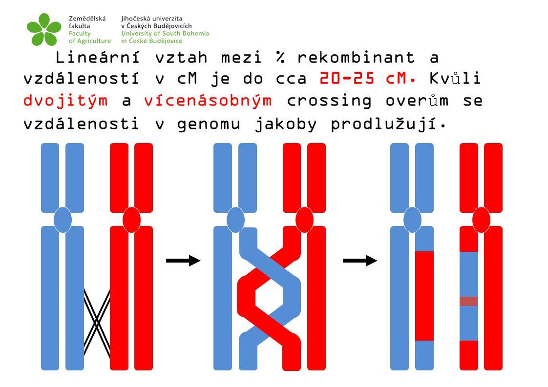 Lineární vztah mezi % rekombinant a vzdáleností v cM je do cca 20-25 cM. Kvůli dvojitým a vícenásobným crossing overům se vzdálenosti v genomu jakoby