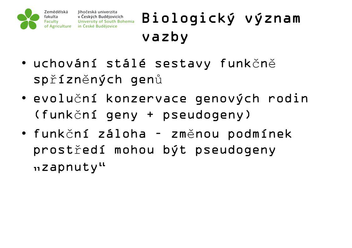 Biologický význam vazby uchování stálé sestavy funkčně spřízněných genů evoluční konzervace genových rodin (funkční geny + pseudogeny) funkční záloha