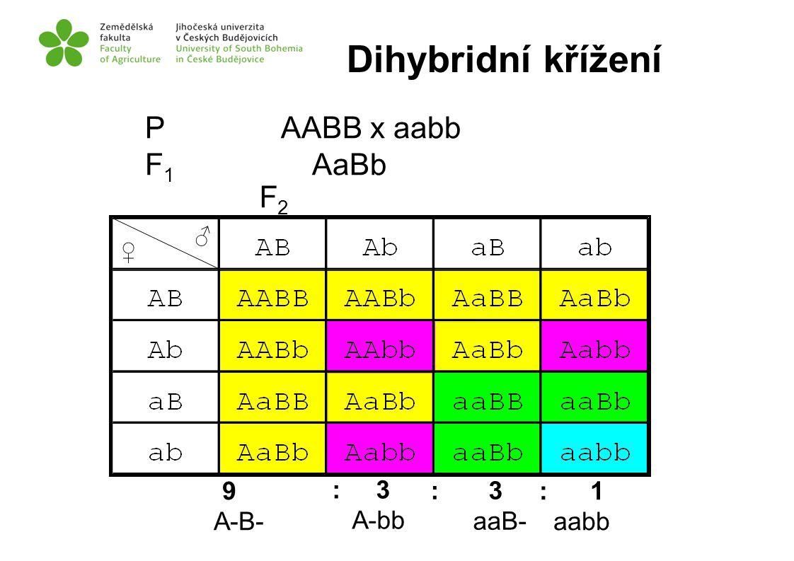 P AABB x aabb F 1 AaBb 9 A-B- : 3 A-bb : 3 aaB- : 1 aabb F2F2 ♂ ♀ Dihybridní křížení