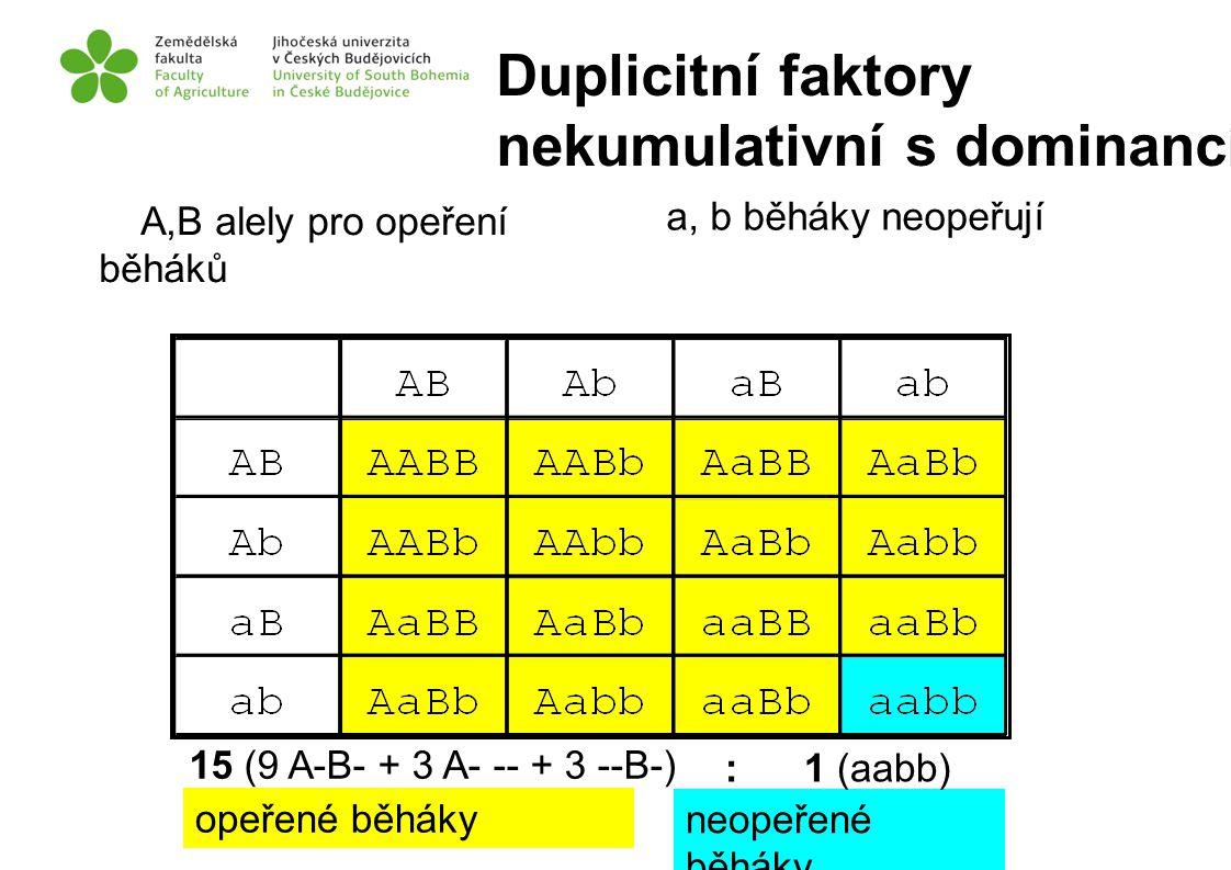 a, b běháky neopeřují A,B alely pro opeření běháků neopeřené běháky opeřené běháky 15 (9 A-B- + 3 A- -- + 3 --B-) : 1 (aabb) Duplicitní faktory nekumu