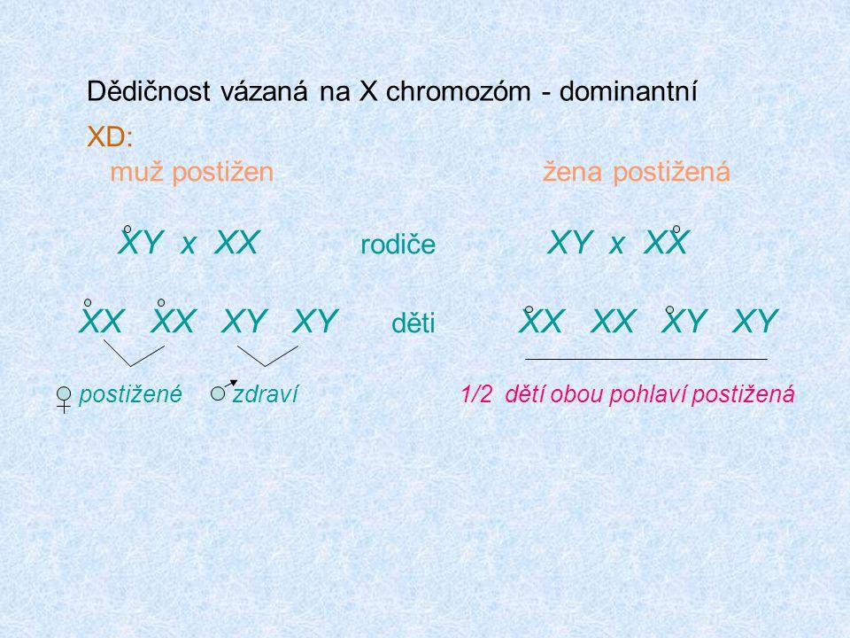 XD: muž postižen žena postižená XY x XX rodiče XY x XX XX XX XY XY děti XX XX XY XY postižené zdraví 1/2 dětí obou pohlaví postižená Dědičnost vázaná na X chromozóm - dominantní