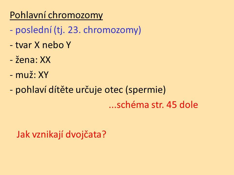 Pohlavní chromozomy - poslední (tj. 23.