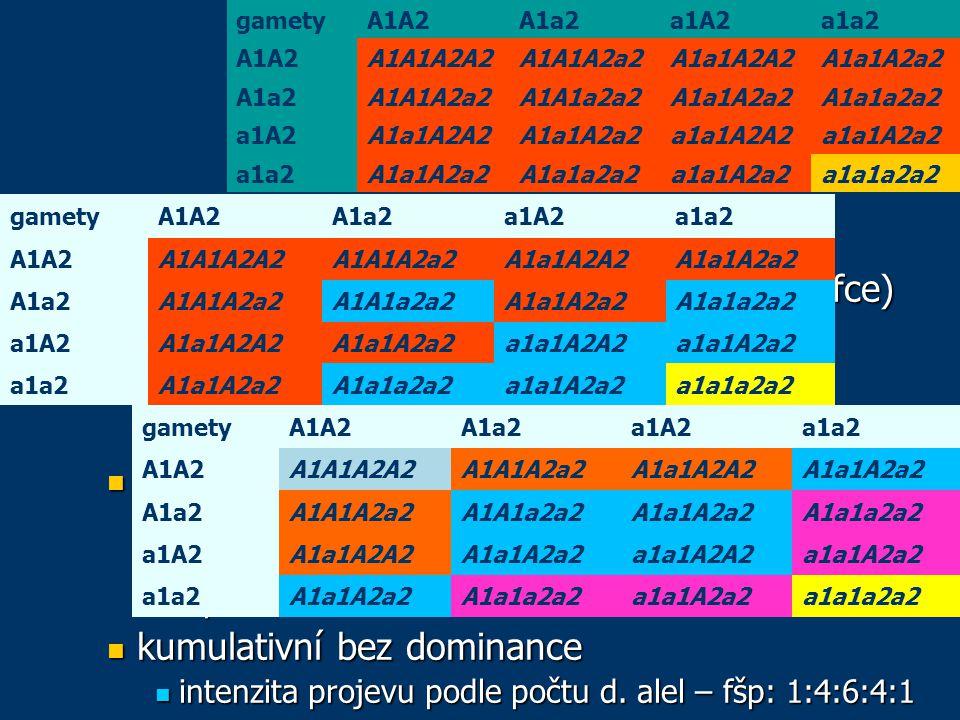 genové interakce duplicita duplicita 1 znak – více genů (stejná nebo podobná fce) 1 znak – více genů (stejná nebo podobná fce) evoluční původ genů – duplikace evoluční původ genů – duplikace nekumulativní s dominancí nekumulativní s dominancí k projevu stačí jediná dominantní alela – fšp: 15:1 k projevu stačí jediná dominantní alela – fšp: 15:1 kumulativní s dominancí kumulativní s dominancí 3 stupně projevu: dominantní alela v obou genech, dominantní alela jen v jedno genu, žádná d.