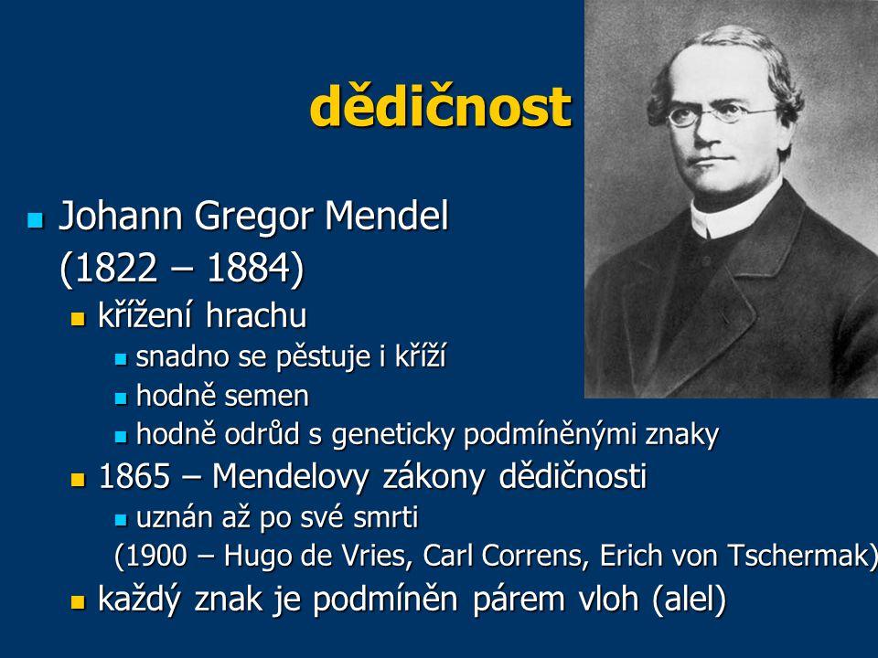 dědičnost Johann Gregor Mendel Johann Gregor Mendel (1822 – 1884) křížení hrachu křížení hrachu snadno se pěstuje i kříží snadno se pěstuje i kříží ho