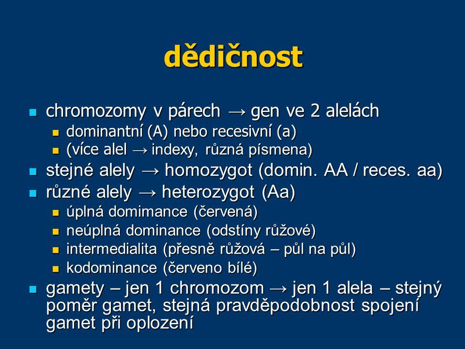 dědičnost autozomální dědičnost – znaky kódované na autozomech (nezáleží na původu alely) autozomální dědičnost – znaky kódované na autozomech (nezáleží na původu alely) gonozomální dědičnost – znaky kódované na gonozomech (záleží na původu alely) gonozomální dědičnost – znaky kódované na gonozomech (záleží na původu alely) křížení = hybridizace křížení = hybridizace rodiče = parentální generace (P) rodiče = parentální generace (P) potomci = filiální generace (F) potomci = filiální generace (F) P → F 1 → F 2 → … P → F 1 → F 2 → …