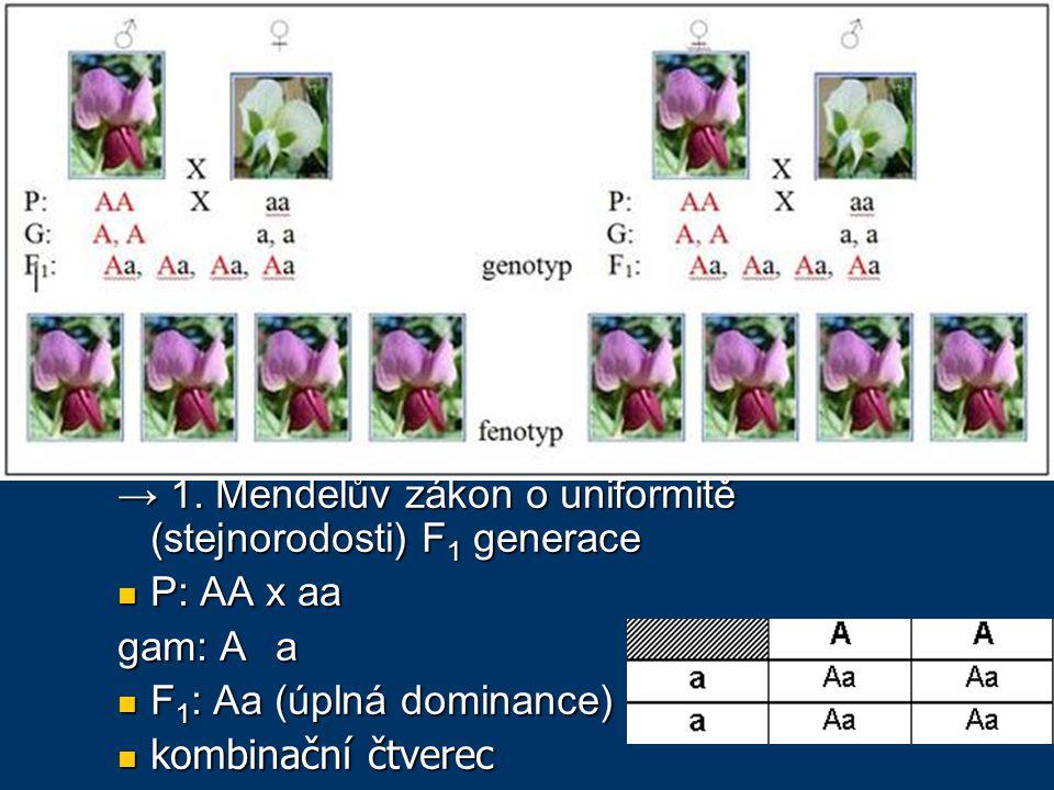 Johann Gregor Mendel autozomálně dědičné kvalitativní znaky autozomálně dědičné kvalitativní znaky barva květu (monogenní znak): barva květu (monogenní znak): červená, nebo bílá potomci vždy červená potomci vždy červená → 1.