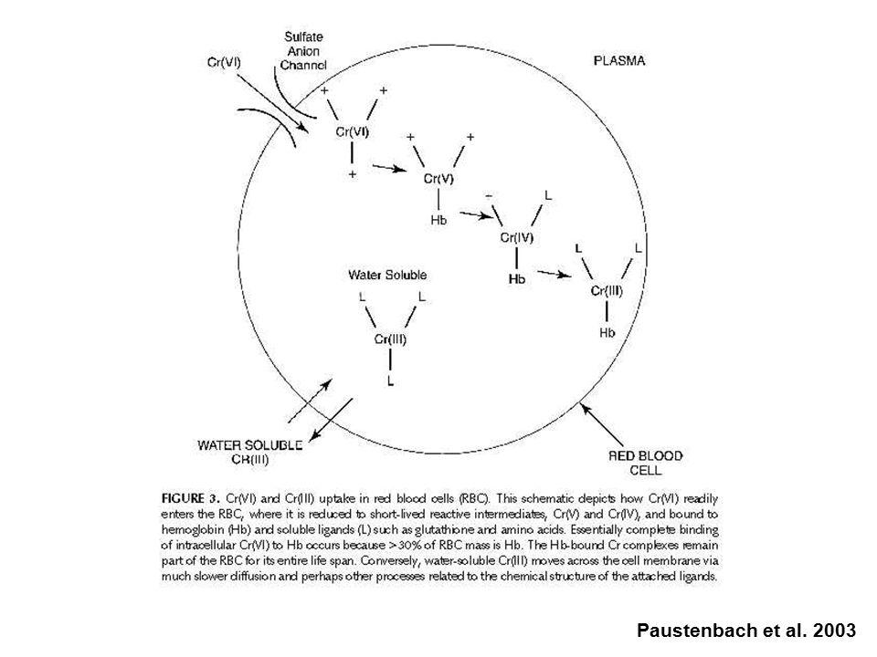 Mechanismy Cr VI indukovaného poškození DNA Trojmocný vs. šestimocný chróm Šestimocný chróm (Cr VI ) velké množství značně reaktivních sloučenin dobře
