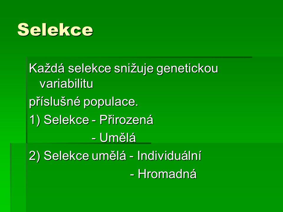 Selekce Každá selekce snižuje genetickou variabilitu příslušné populace. 1) Selekce - Přirozená - Umělá - Umělá 2) Selekce umělá - Individuální - Hrom