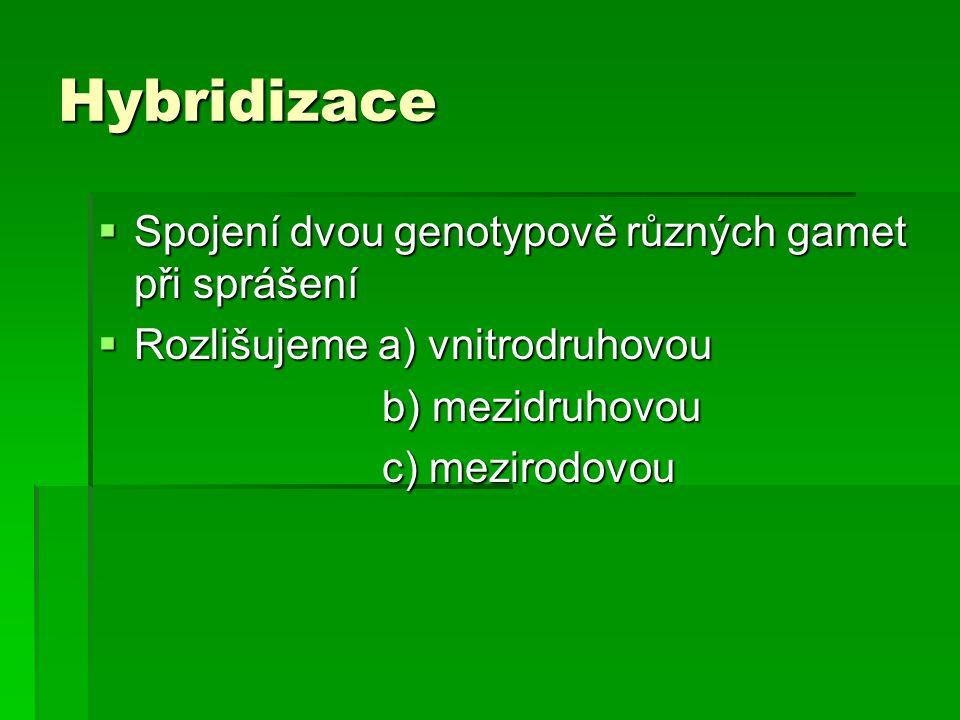 Hybridizace  Spojení dvou genotypově různých gamet při sprášení  Rozlišujeme a) vnitrodruhovou b) mezidruhovou b) mezidruhovou c) mezirodovou c) mez