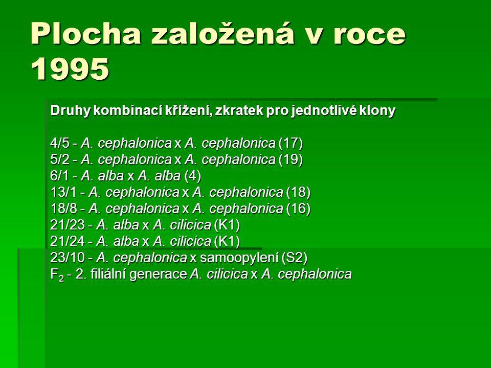 Plocha založená v roce 1995 Druhy kombinací křížení, zkratek pro jednotlivé klony 4/5 - A. cephalonica x A. cephalonica (17) 5/2 - A. cephalonica x A.