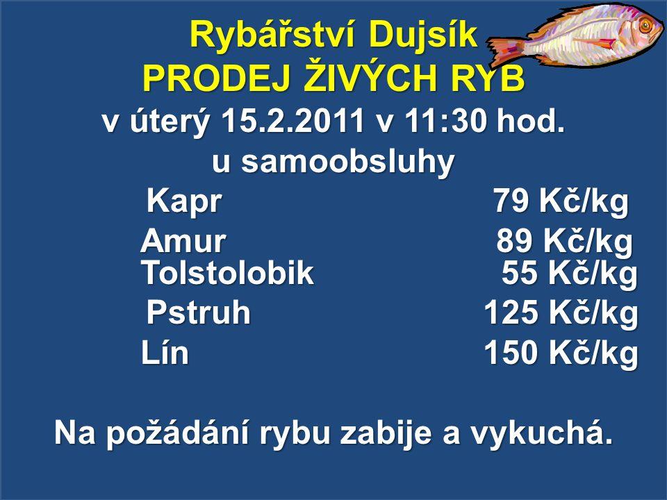 Rybářství Dujsík PRODEJ ŽIVÝCH RYB v úterý 15.2.2011 v 11:30 hod. u samoobsluhy Kapr 79 Kč/kg Kapr 79 Kč/kg Amur 89 Kč/kg Tolstolobik 55 Kč/kg Pstruh