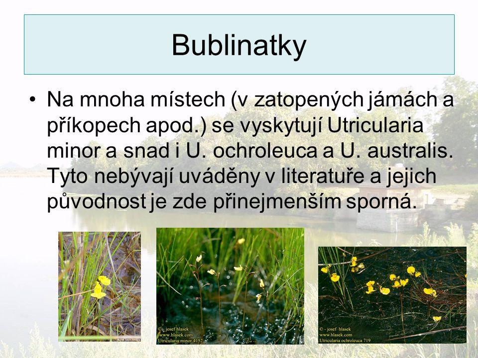 Bublinatky Na mnoha místech (v zatopených jámách a příkopech apod.) se vyskytují Utricularia minor a snad i U. ochroleuca a U. australis. Tyto nebývaj