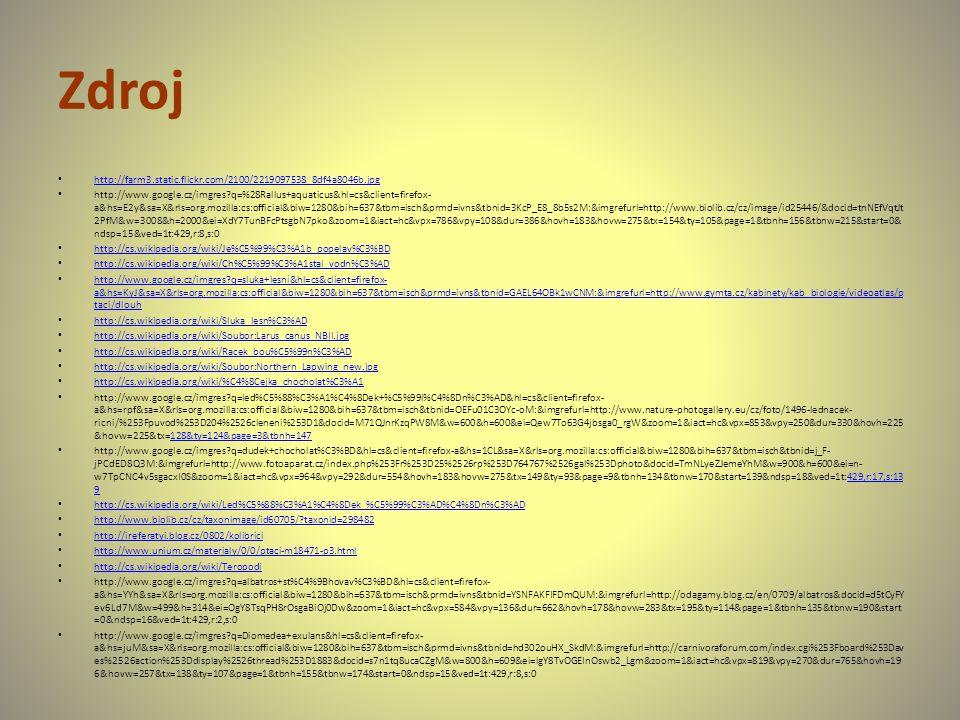 Zdroj http://farm3.static.flickr.com/2100/2219097538_8df4a8046b.jpg http://www.google.cz/imgres?q=%28Rallus+aquaticus&hl=cs&client=firefox- a&hs=E2y&s