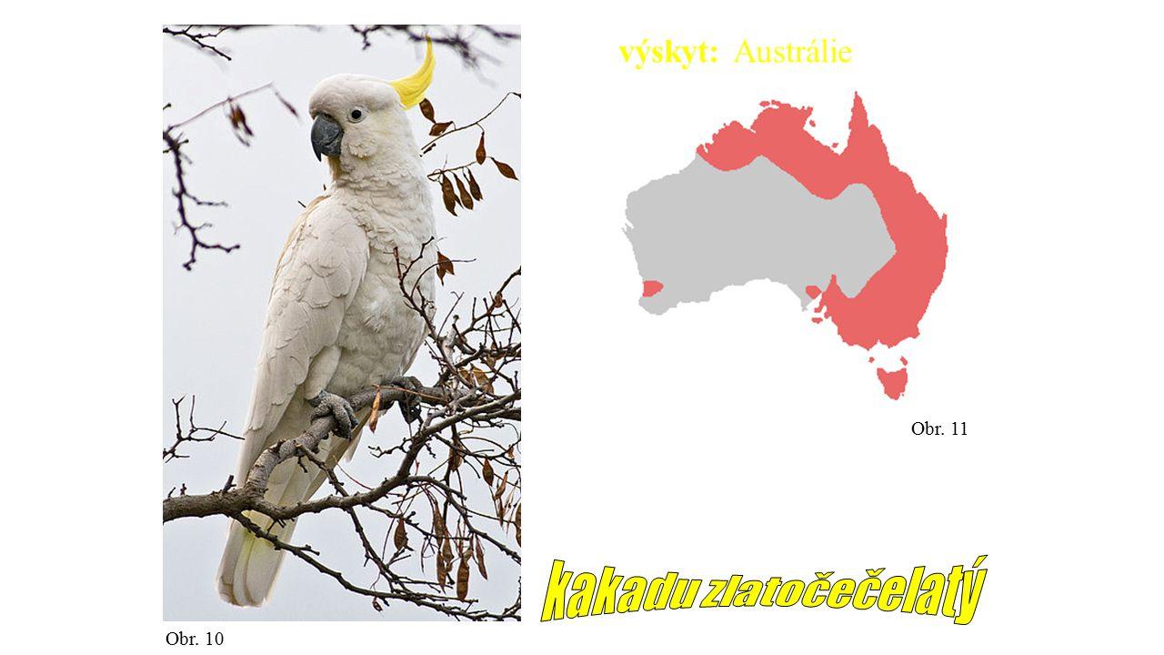 Obr. 10 Obr. 11 výskyt: Austrálie