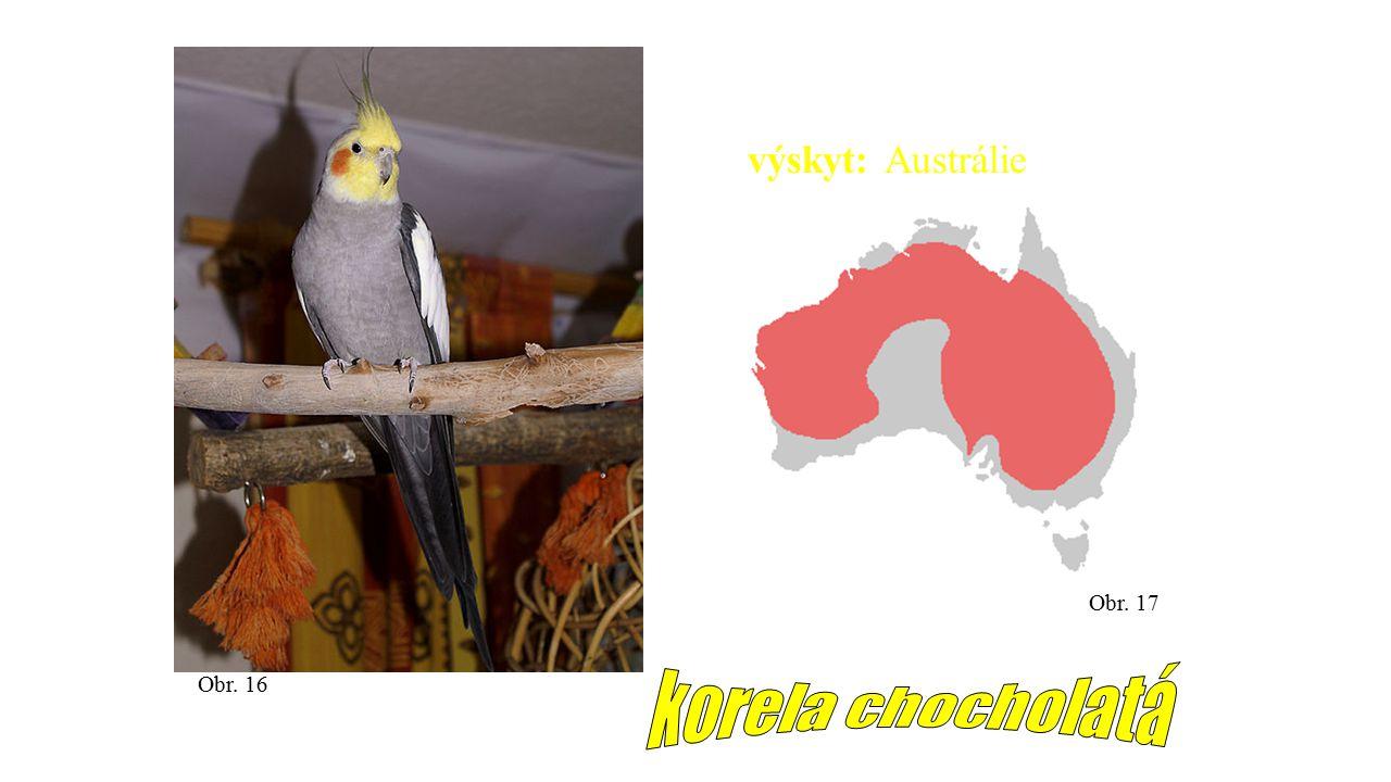 Obr. 16 Obr. 17 výskyt: Austrálie