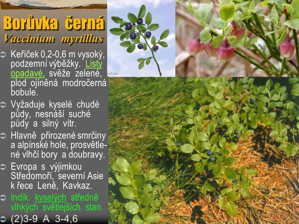 Borůvka černá Vaccinium myrtillus  Keříček 0,2-0,6 m vysoký, podzemní výběžky. Listy opadavé, svěže zelené, plod ojíněná modročerná bobule.  Vyžaduj