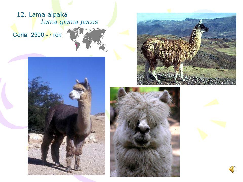 11. Osel domácí Equus asinus Cena: 2000,- / rok