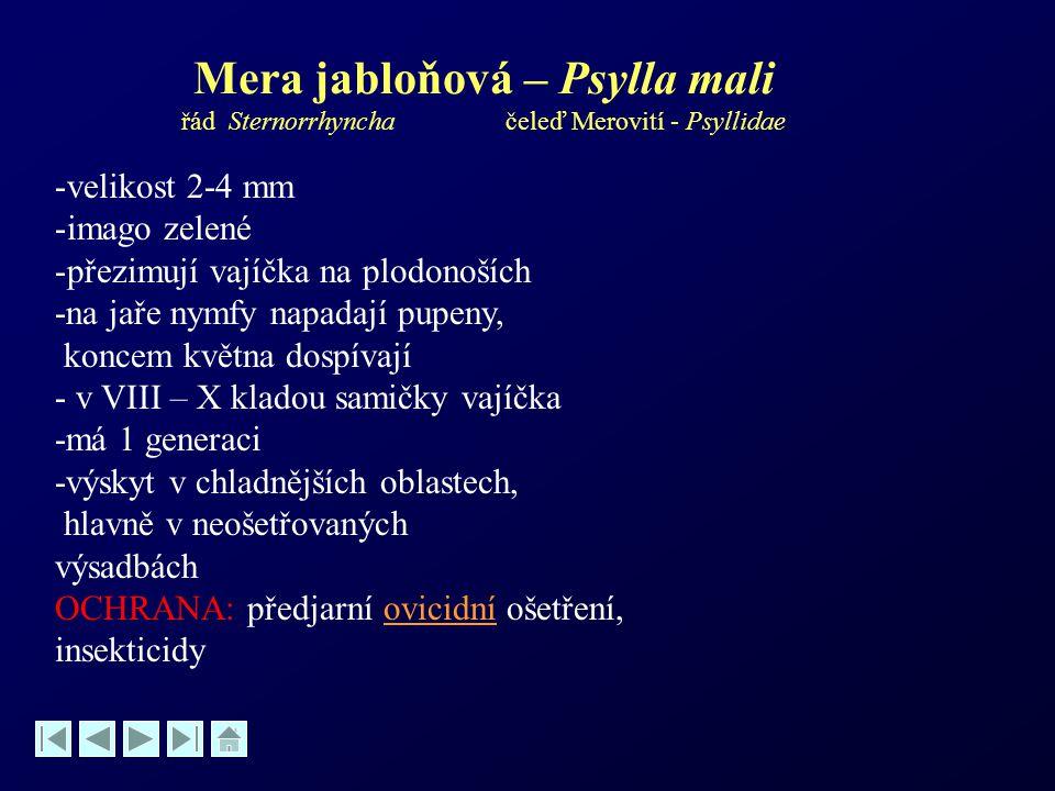 Mera jabloňová – Psylla mali řád Sternorrhyncha čeleď Merovití - Psyllidae -velikost 2-4 mm -imago zelené -přezimují vajíčka na plodonoších -na jaře n