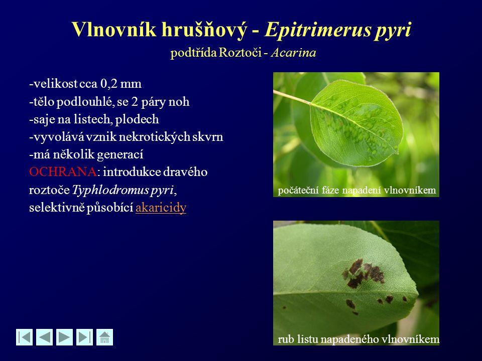 Vlnovník hrušňový - Epitrimerus pyri podtřída Roztoči - Acarina -velikost cca 0,2 mm -tělo podlouhlé, se 2 páry noh -saje na listech, plodech -vyvoláv