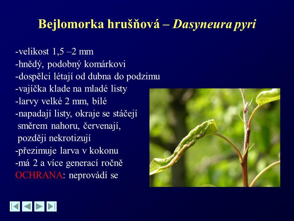 Bejlomorka hrušňová – Dasyneura pyri -velikost 1,5 –2 mm -hnědý, podobný komárkovi -dospělci létají od dubna do podzimu -vajíčka klade na mladé listy